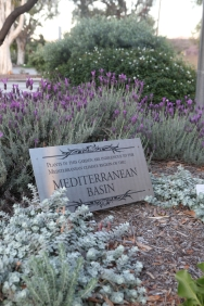 Spanish lavender with Dittany of Crete